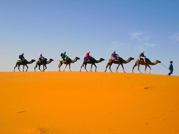 Camel-Train-2