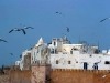 essaouira-with-birds