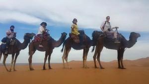 Cesar Camel Photo 2